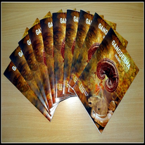 Ganoderma Booklet EN - set of 10 pcs